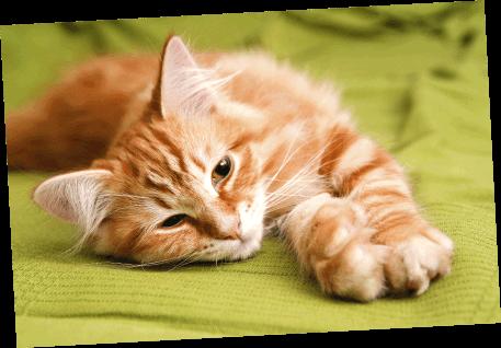 Best cat health insurance