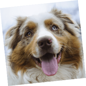 Promo Codes & Discounts | Healthy Paws Pet Insurance