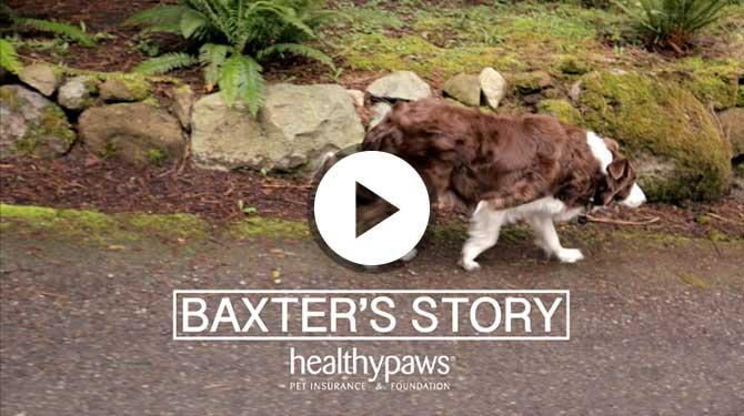 Baxter Dog Aspca