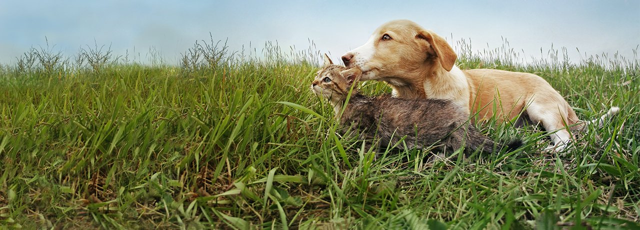 Dog and cat sitting in grassy field