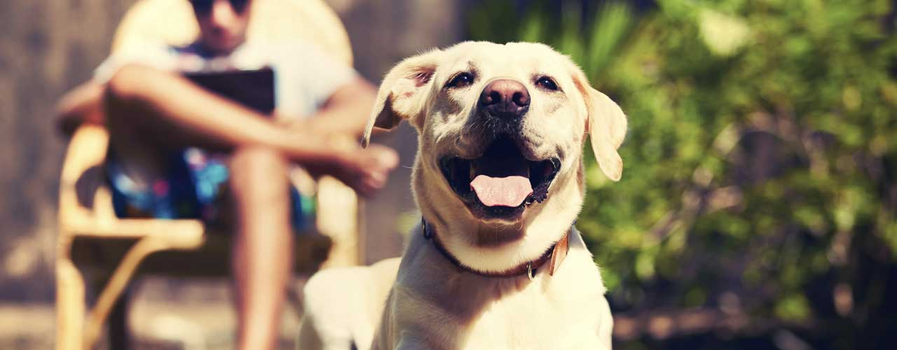 Image result for Pet insurance can be obtained at reasonable rates