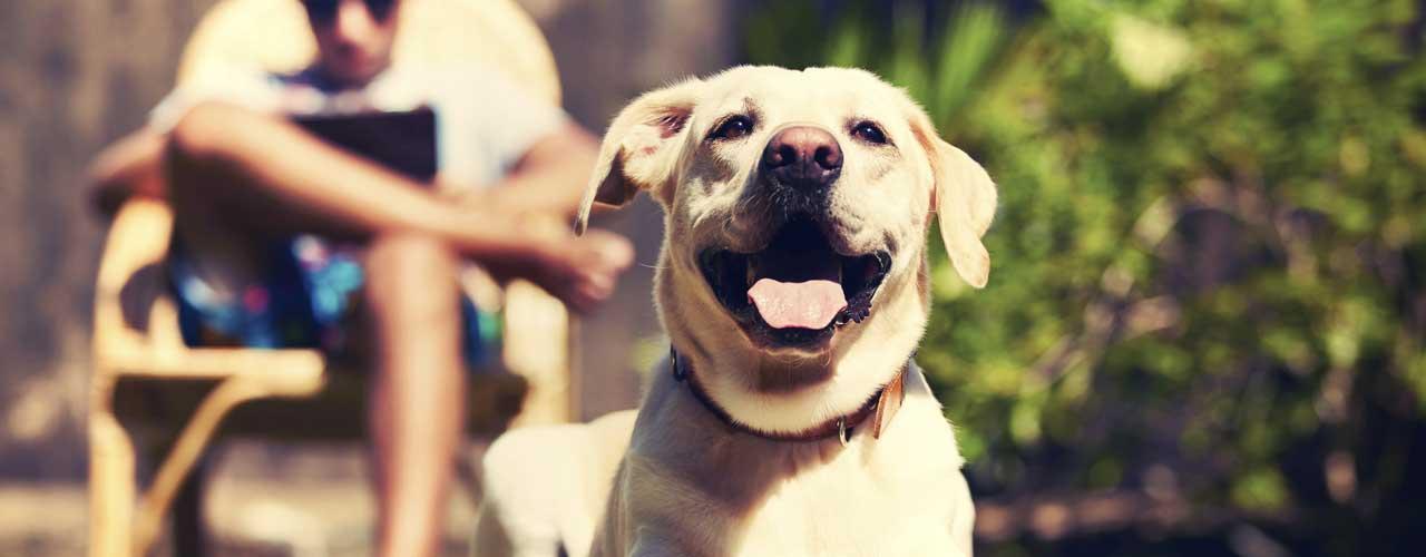 Pet Insurance Reviews Healthy Paws Pet Insurance