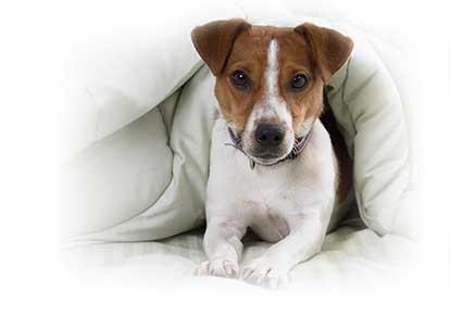 healthy pet insurance
