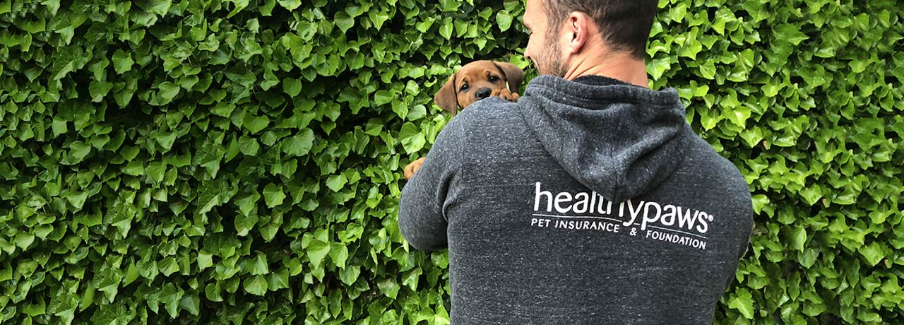 Small brown puppy being held by Healthy Paws Pet Insurance employee