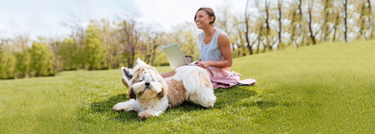 Small white dog playing in park while owner works on laptop
