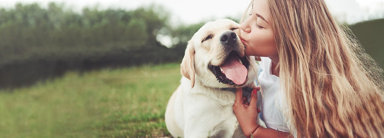 Labrador Retriever being kissed by pet parent