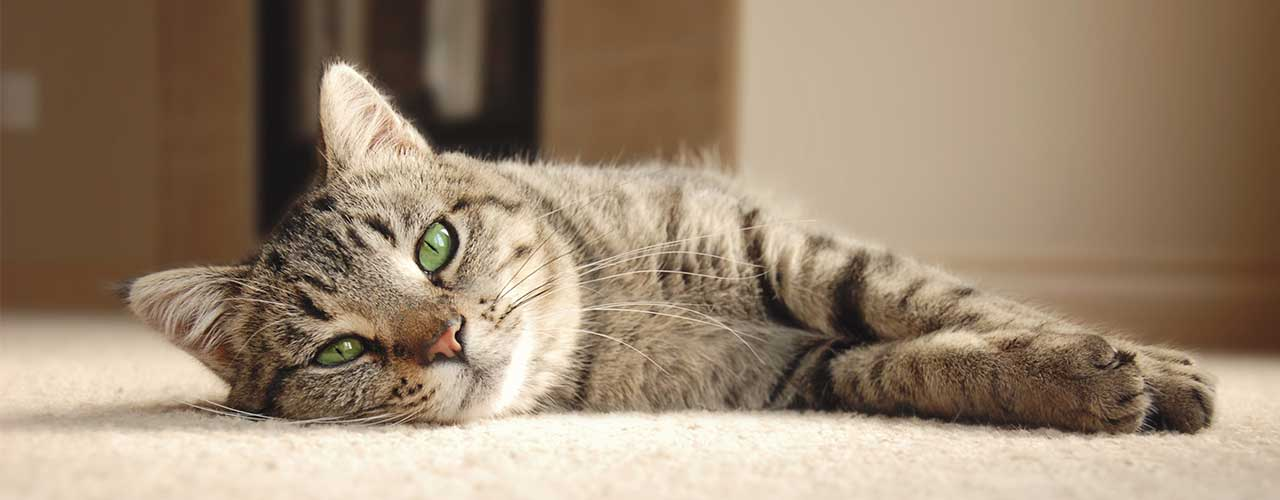 flea pills for cats reviews