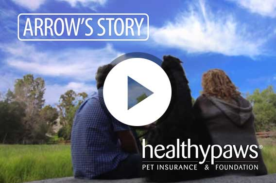 healthy paws pet insurance   rated best in 2017