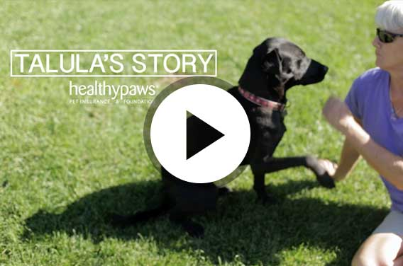 Dog with elbow dysplasia