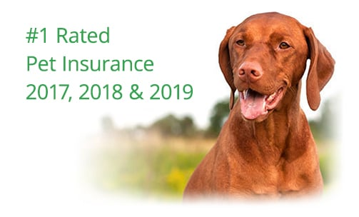pet insurance comparison healthy paws vs pets best