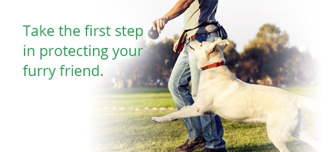 Dog Health Insurance Reviews