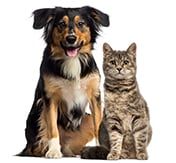 pet insurance with unlimited lifetime benefits