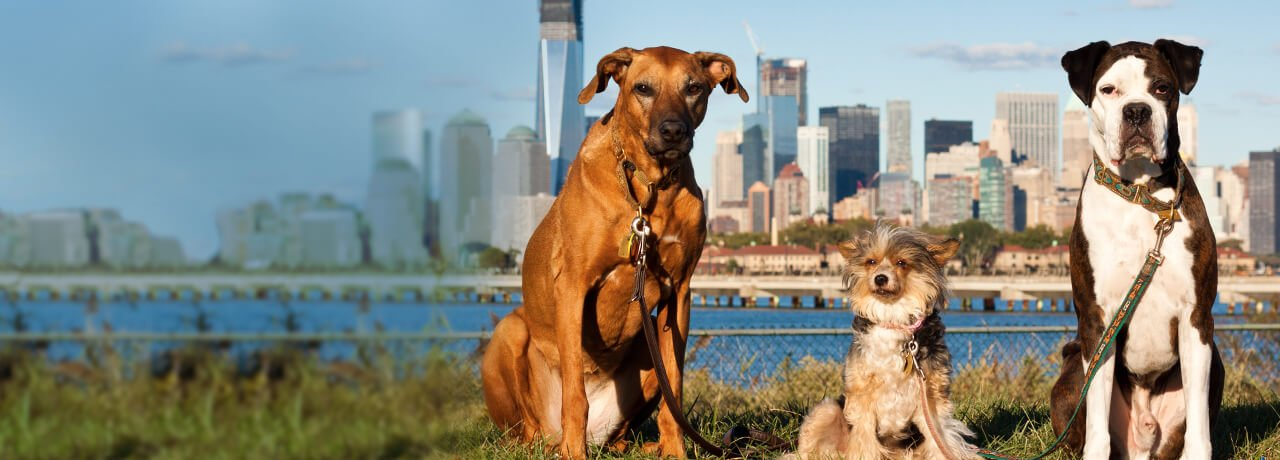 New York Pet Insurance. #1 Customer-Rated Pet Insurance. Unlimited Lifetime Benefits.