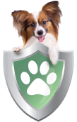 Dog insurance and cat insurance with best coverage from Healthy Paws.